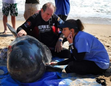 Stephen McCulloch, Examining Beached FL Dolphin
