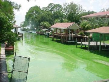 Green algal bloom coastal waters