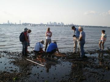 Bioblitz tidepooling in Boston Harbor