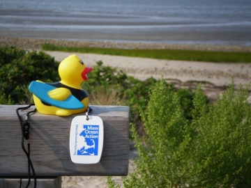 Surfer Duck on Duxbury Bay