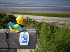 Ocean River Duckie!
