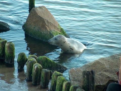 The Seals Thank ORI Ecostewards