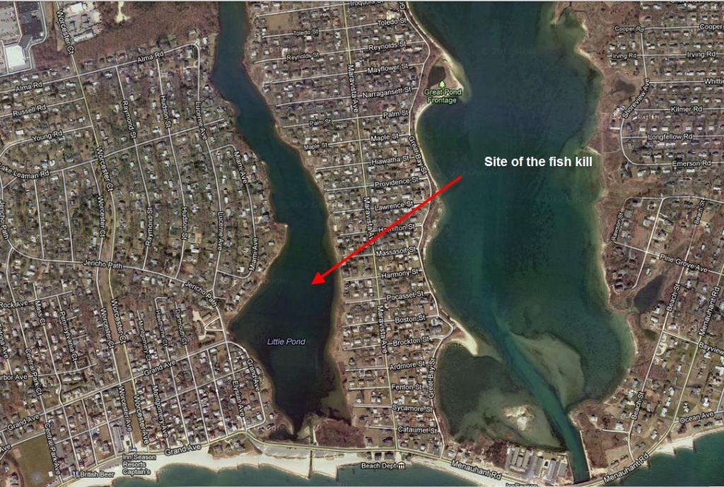 Falmouth Fish Kill Site