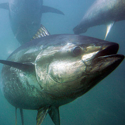 tuna-example