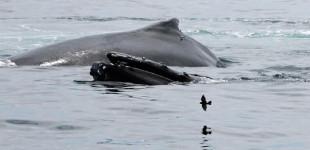 Petrel Whales