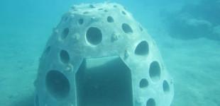 Underwater grouper hotel