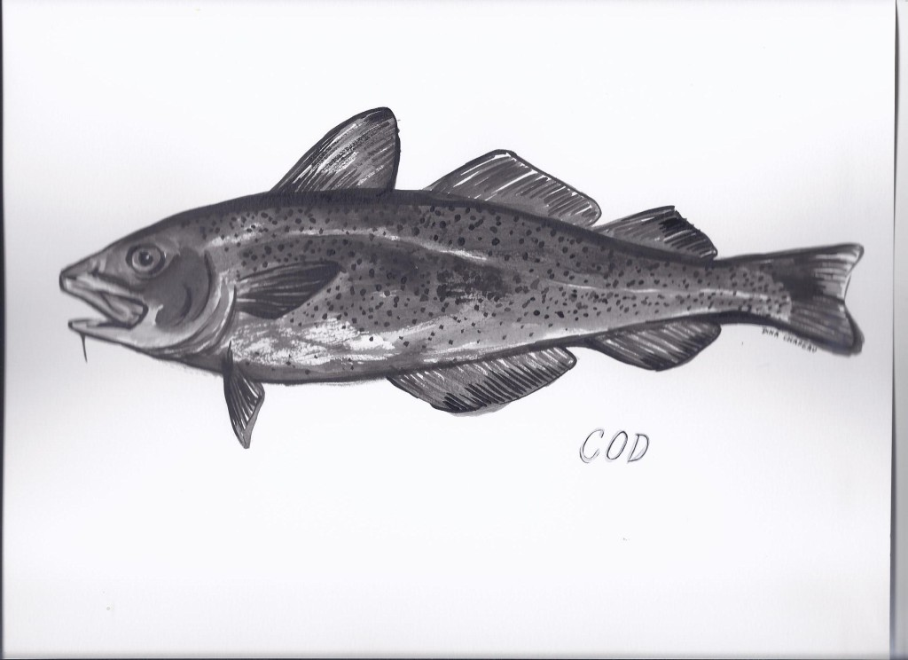 Cod fish Illustration by Dina Chapeau