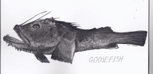 GoosefishMonkbyDinaChapeau