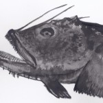 Goosefish or monkfish by Dina Chapeau for the Ocean River Institute