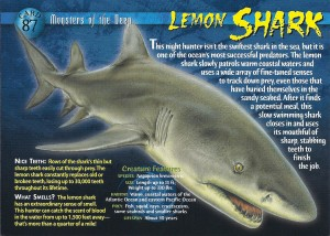 Lemon Shark card by the Jupiter Dive Center dot com.