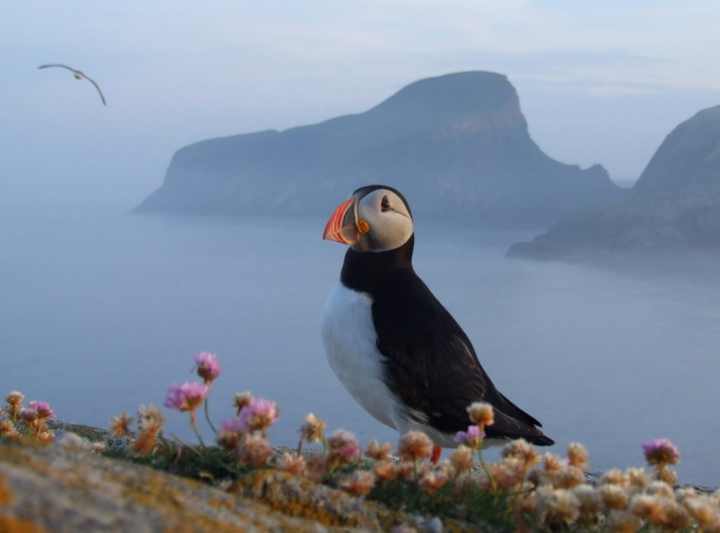 Photo: fair-isle.blogspot.com
