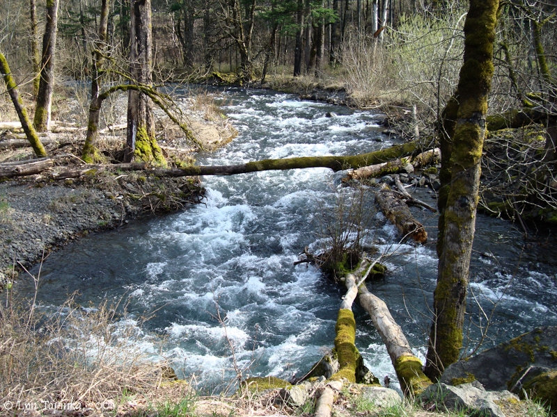 Herman Creek, Oregon, Photo: Columbia River Images