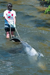 Save The Dolphins And Seagrasses Of Indian River Lagoon