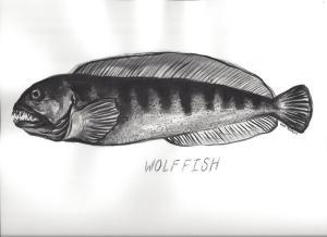 Wolffish