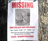 missing-scallops