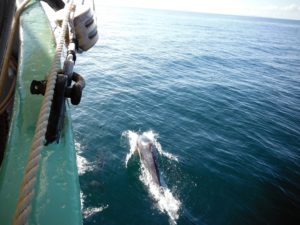 dolphin-on-the-bow